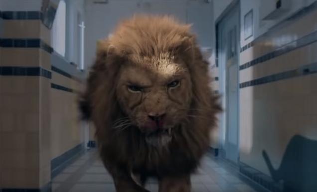 prooi-uncaged-lion